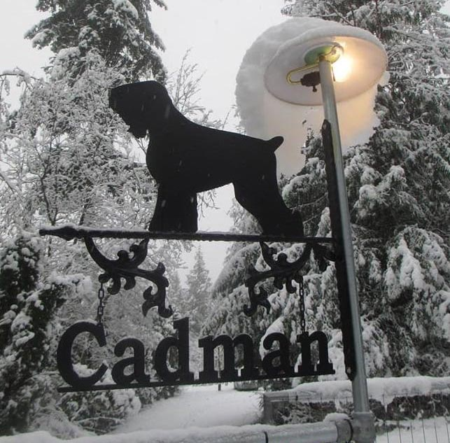 owner of Pinnacle Black Russian Terriers - Breeder